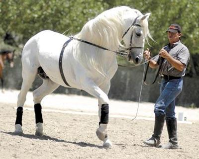 Horses, rider dance together