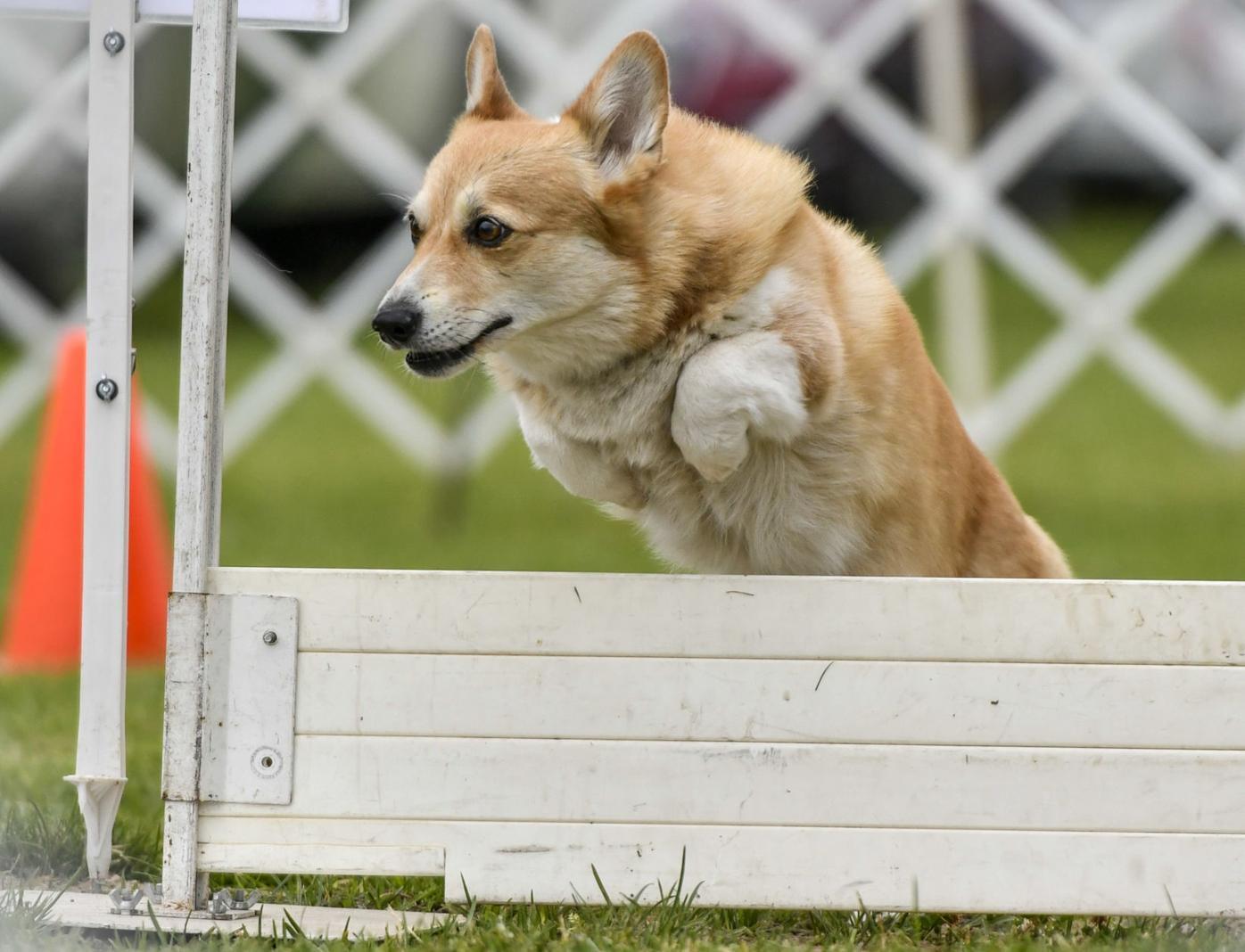 073121 Dog show 02.JPG