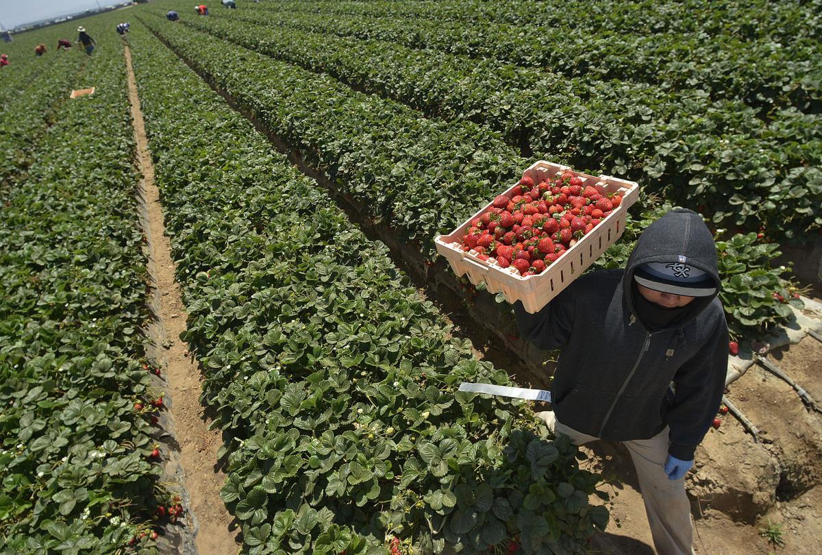 080516 H2A farmworkers 02.jpg
