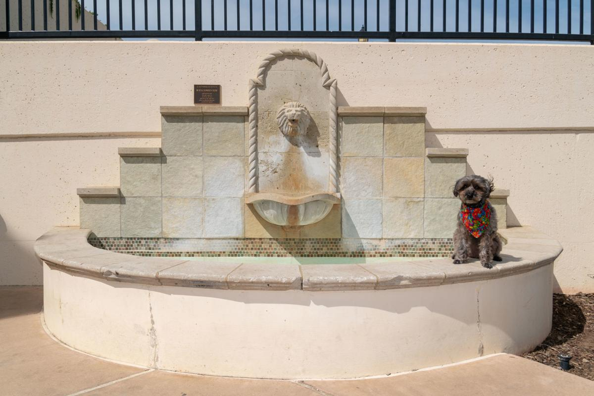 Where's Sparkie? Sparkie is on a fountain in the courtyard of this building. No water unfortunately