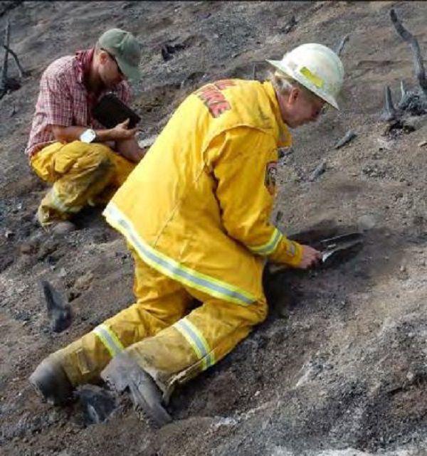 WERT assessing severity of soil burn