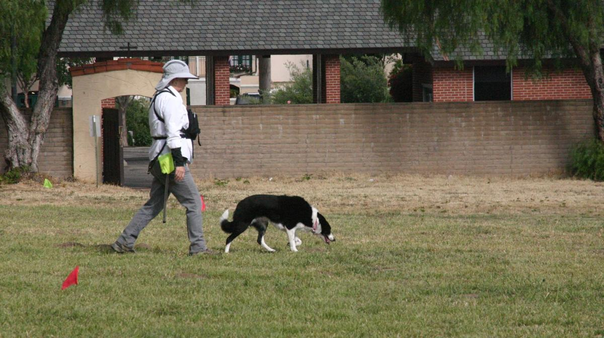 Forensic canines-Piper searches
