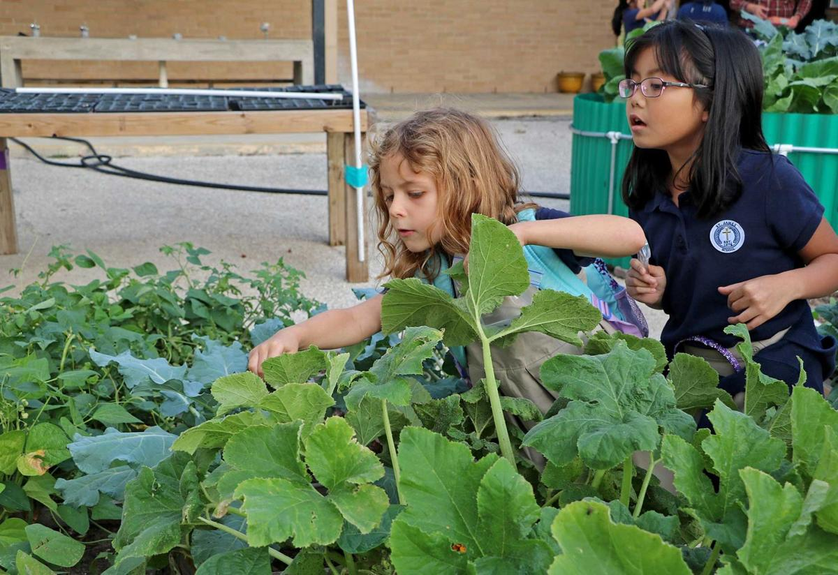 St. James students learn about gardening, native plants