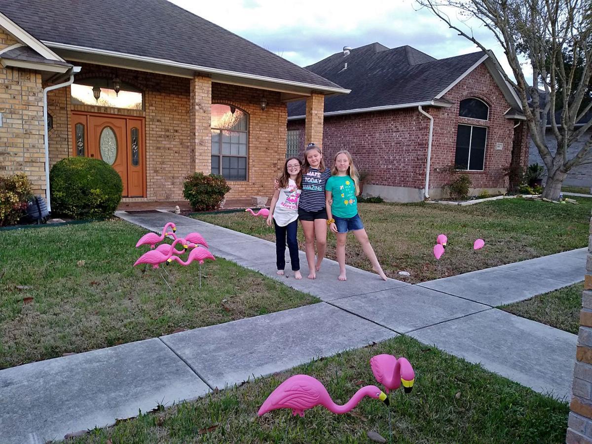 SCA flocks
