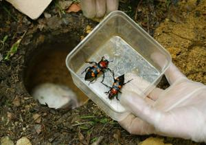 Conservationists say endangered beetle species found in Ohio