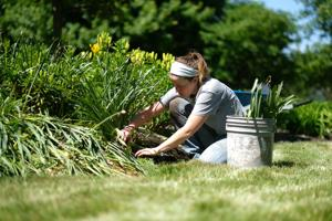<p>File. Caitlin Deran, with Bowling Green Parks and Recreation, cuts back daffodils at Simpson Garden Park.</p>