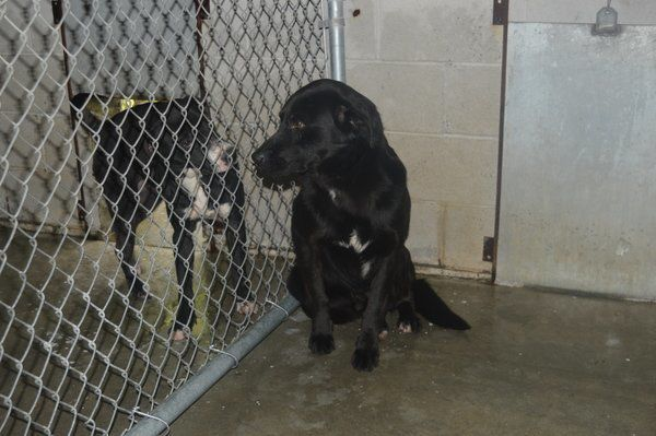 Animals for adoption at the Laurel County Animal Shelter