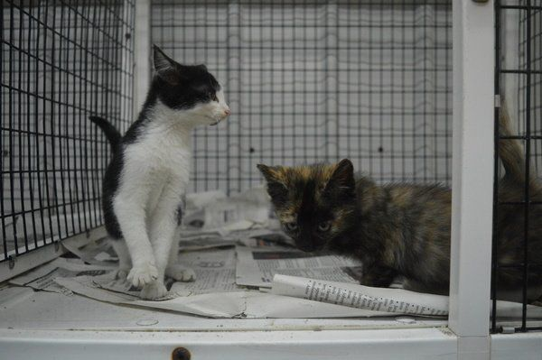 Pets available for adoption