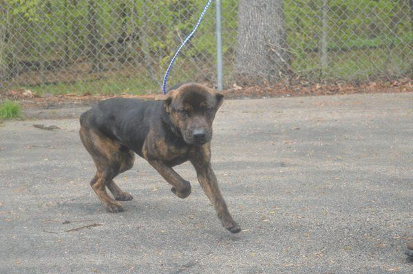 SAVE ME: Animals available for adoption at Laurel County