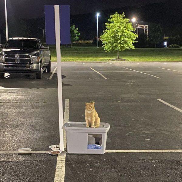 Memorialcreated for 'Joe' the hospital parking lot cat