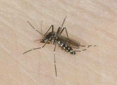 Managing mosquitoes