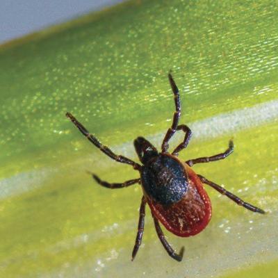 Relatively new tick-borne illness, alpha-gal syndrome