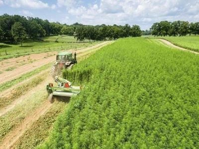 USDA: Hemp OK to take through states