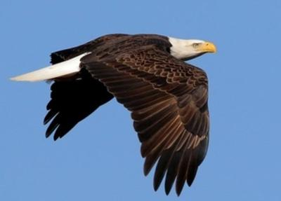 Eagle Watch Weekends available at Kentucky State Park