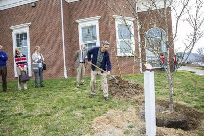 Cumberlands celebrates Arbor Day, plants tree dedicated to Sutton