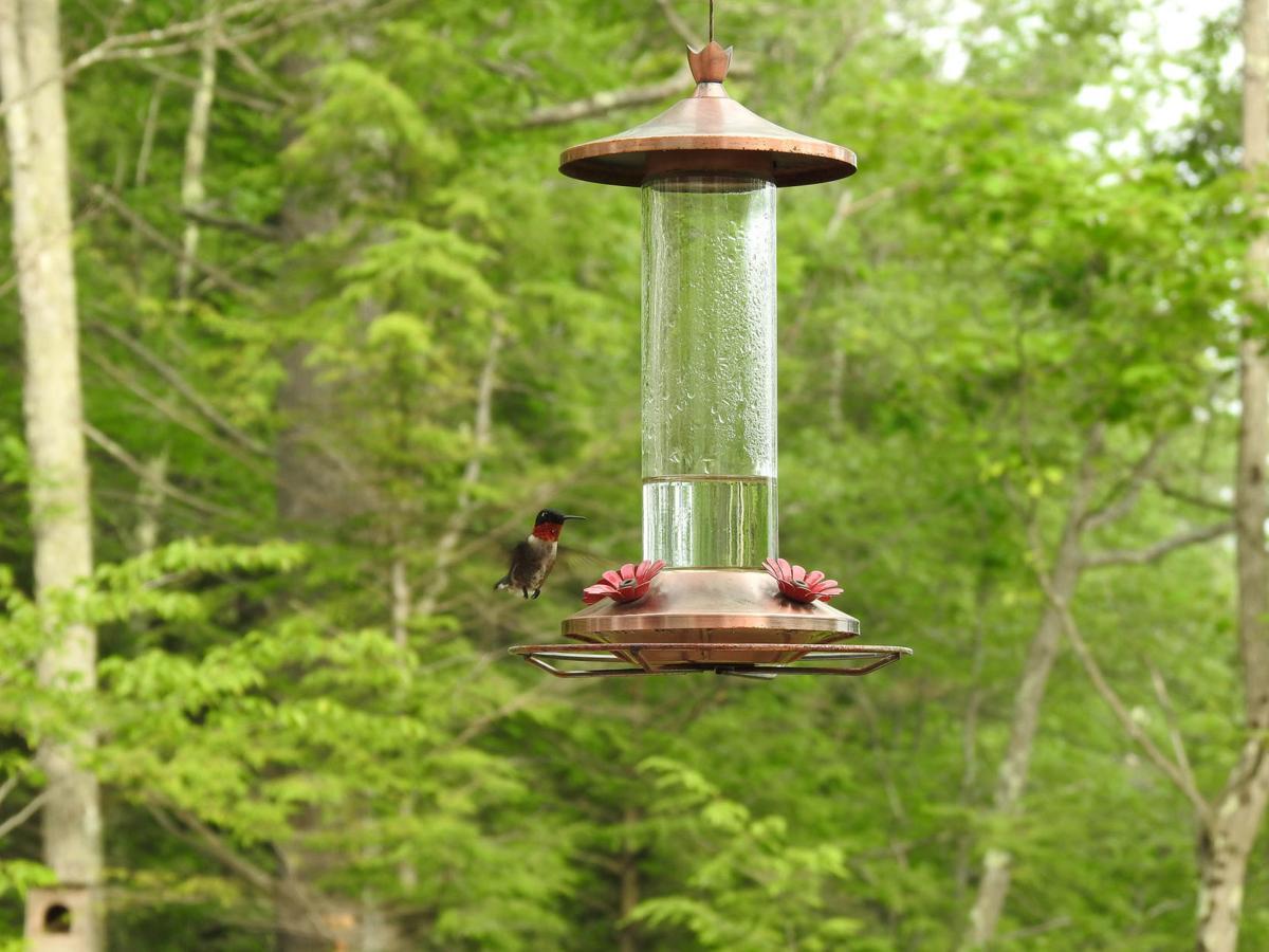 20200707-MAG-walsh hummingbird