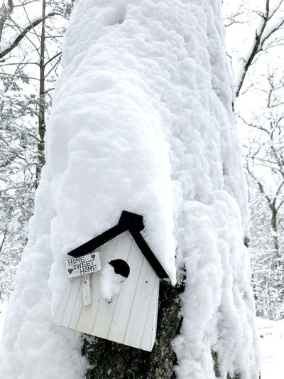 birdhouse snow.heic