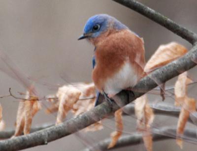 20200120-MAG-bosak bluebird2