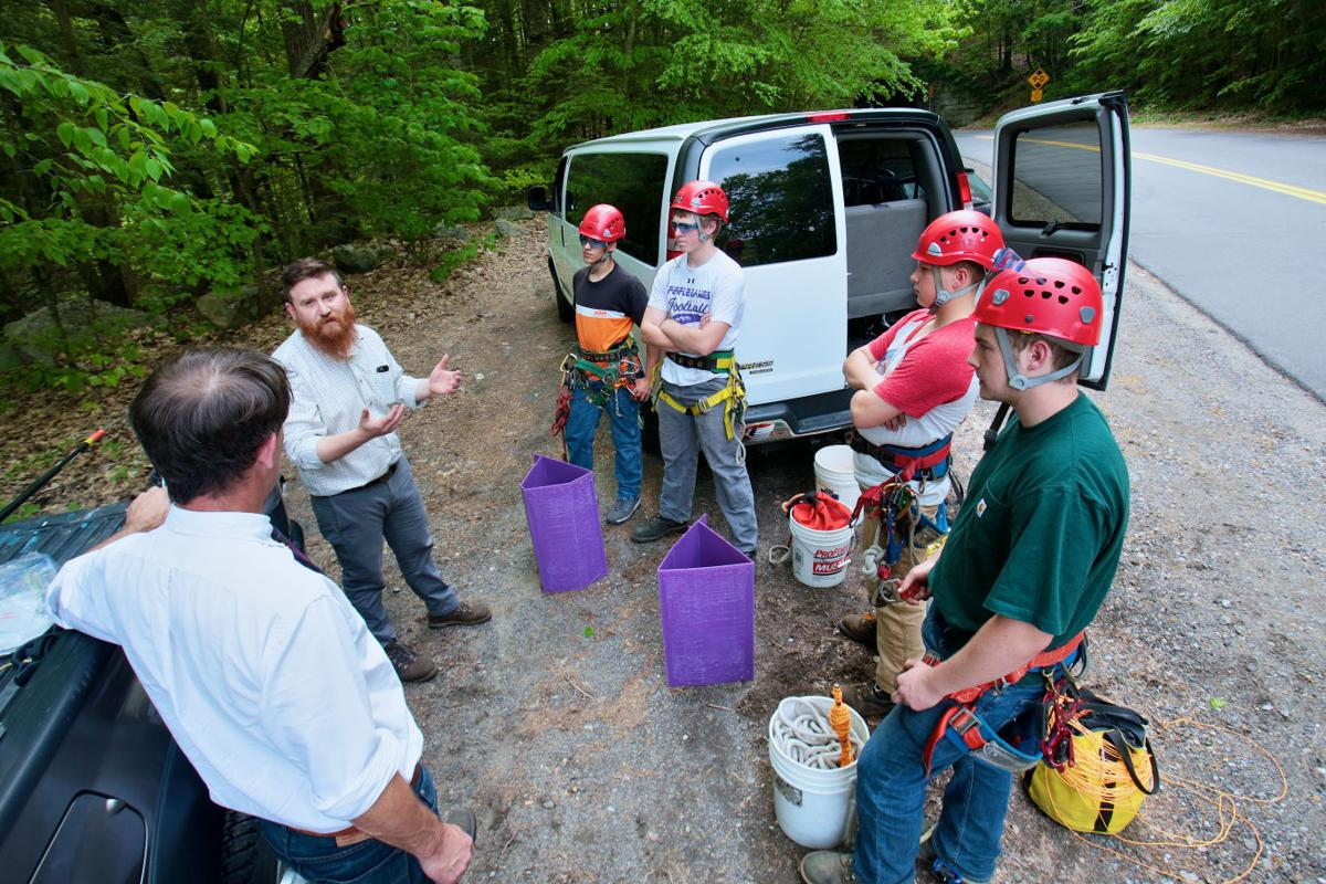Eyes out for emerald ash borer