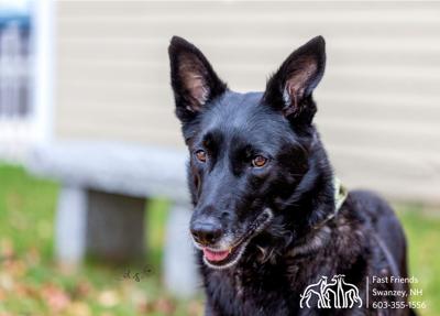 Dog of the Week: Lottie