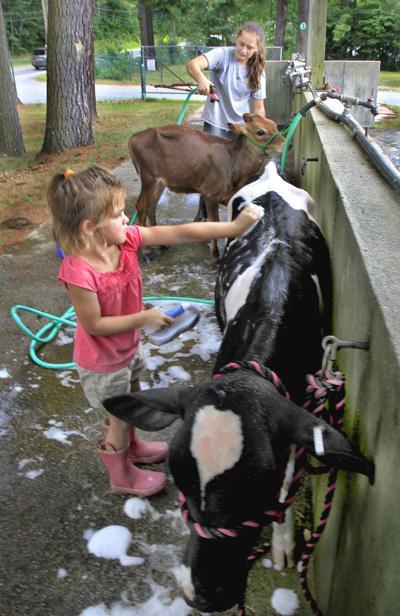A bovine bath