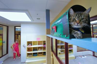 Kitty at MHS
