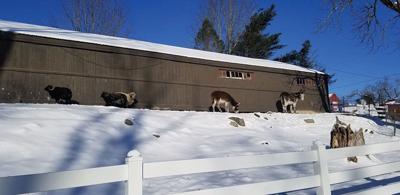 Winter Recreation on the Farm