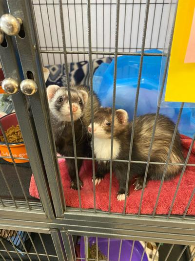 Pet of the Week: Clementine & Mouse