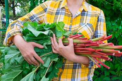 Grow Some Rhubarb!