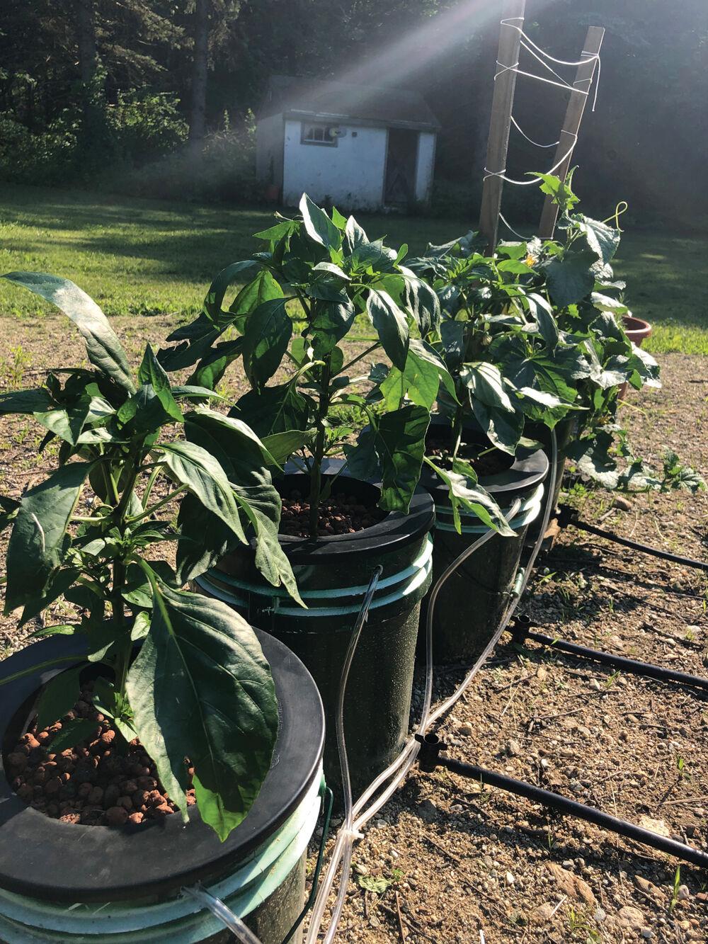 Scientific Gardening