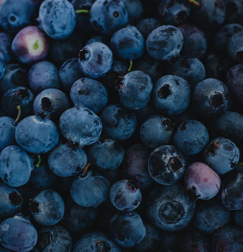 20200730-FEA-blueberries