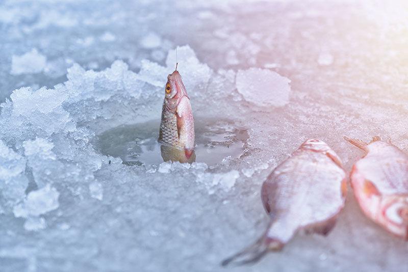 Ice Fishing Derbies