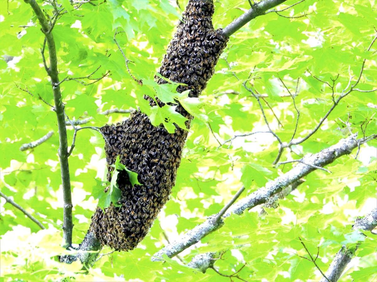 20210611-MAG-syrene swarm full