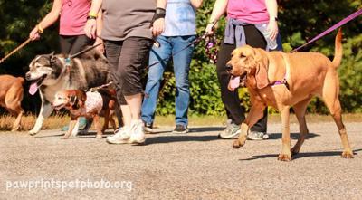 MHS walk for animals
