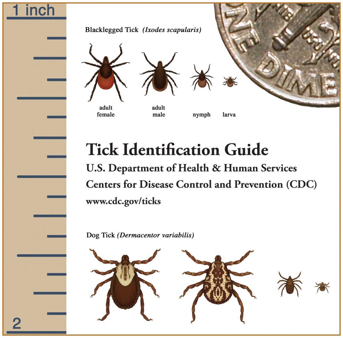 Checking for ticks