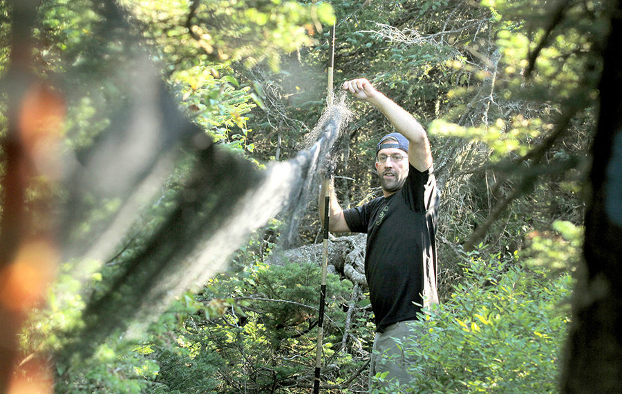 Taking measure of blackpoll warblers