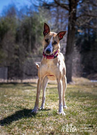 Dog of the Week: Asha