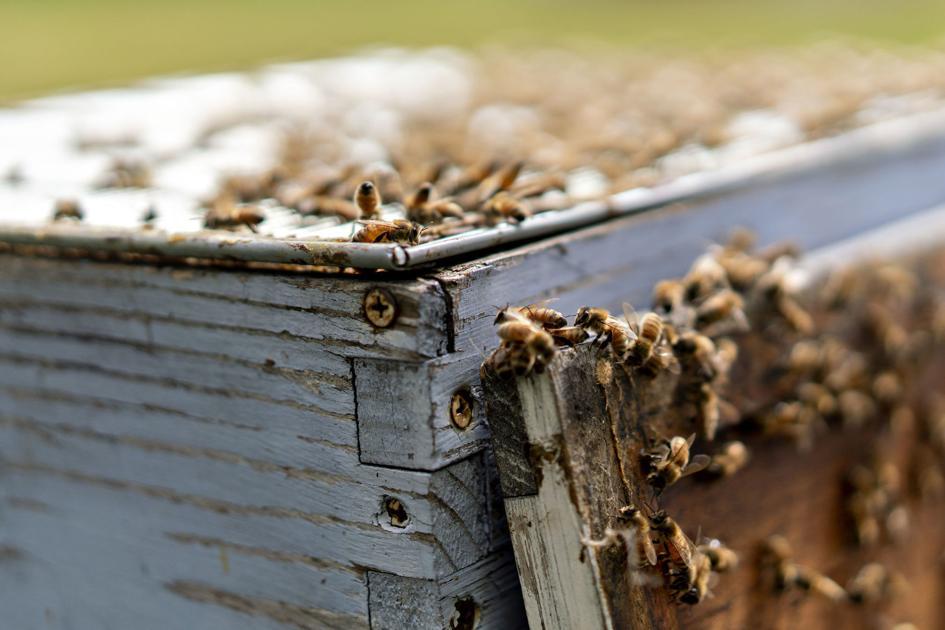 Beekeeper pitches Keene becoming 'Bee City'