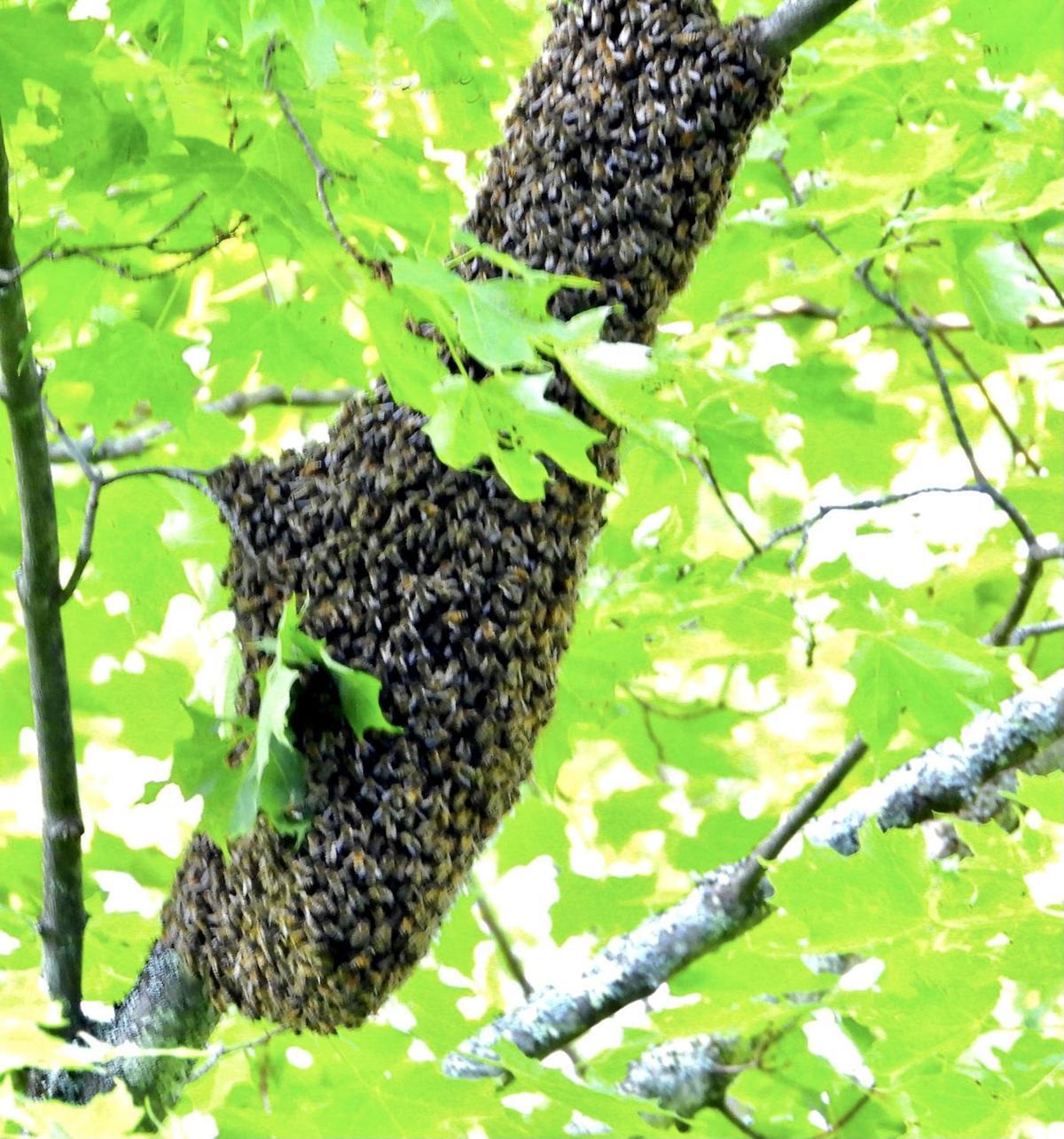 20210611-MAG-syrene swarm mid