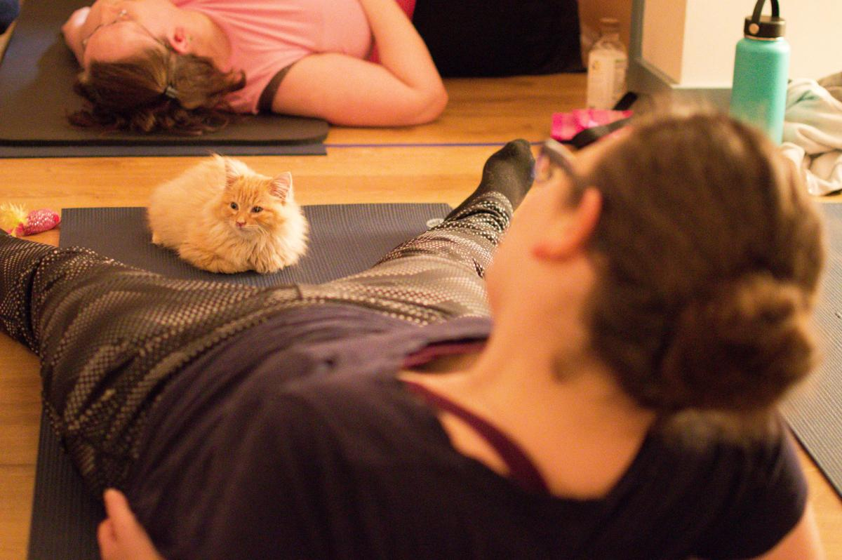 20190515-MAG-cats on mats 1