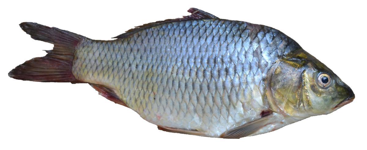 20190710-MAG-fish