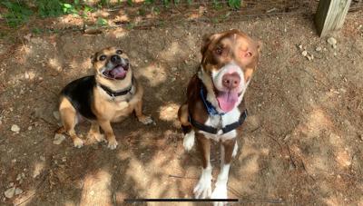 Pet of the Week: Murphy and Sadie