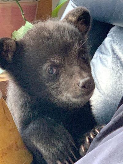 Marlow bear