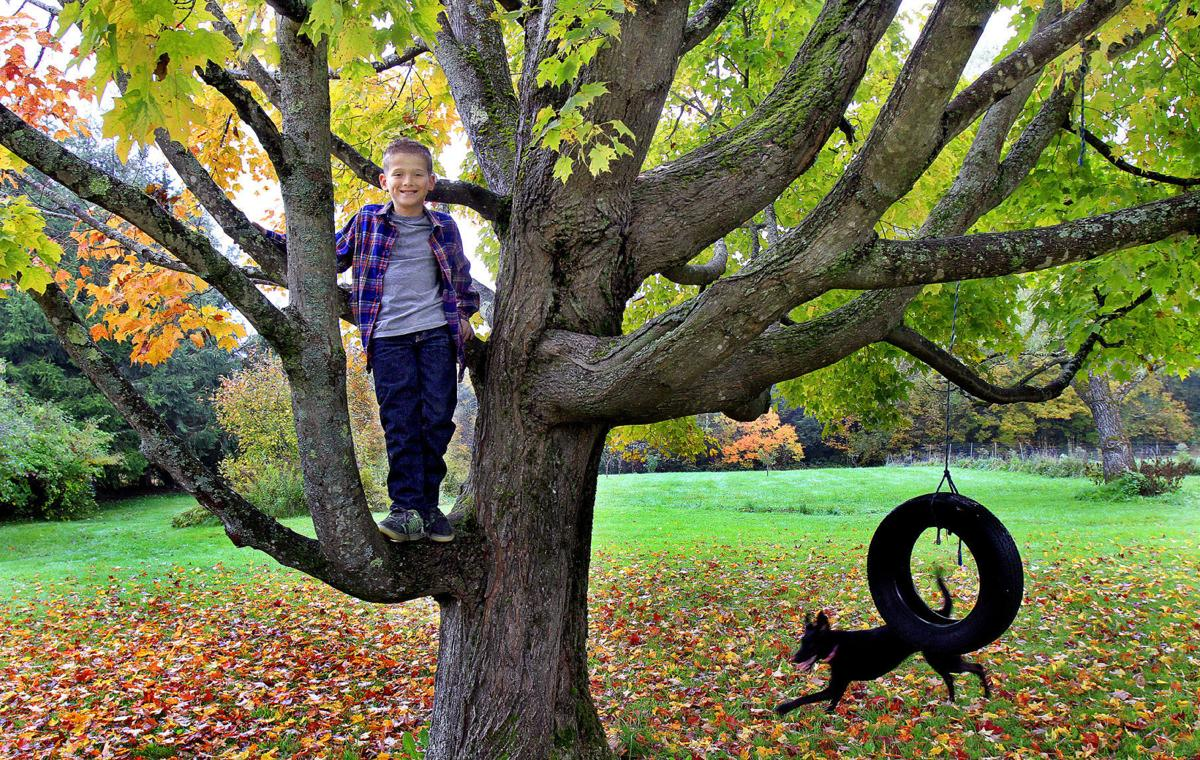 A preferred climbing tree