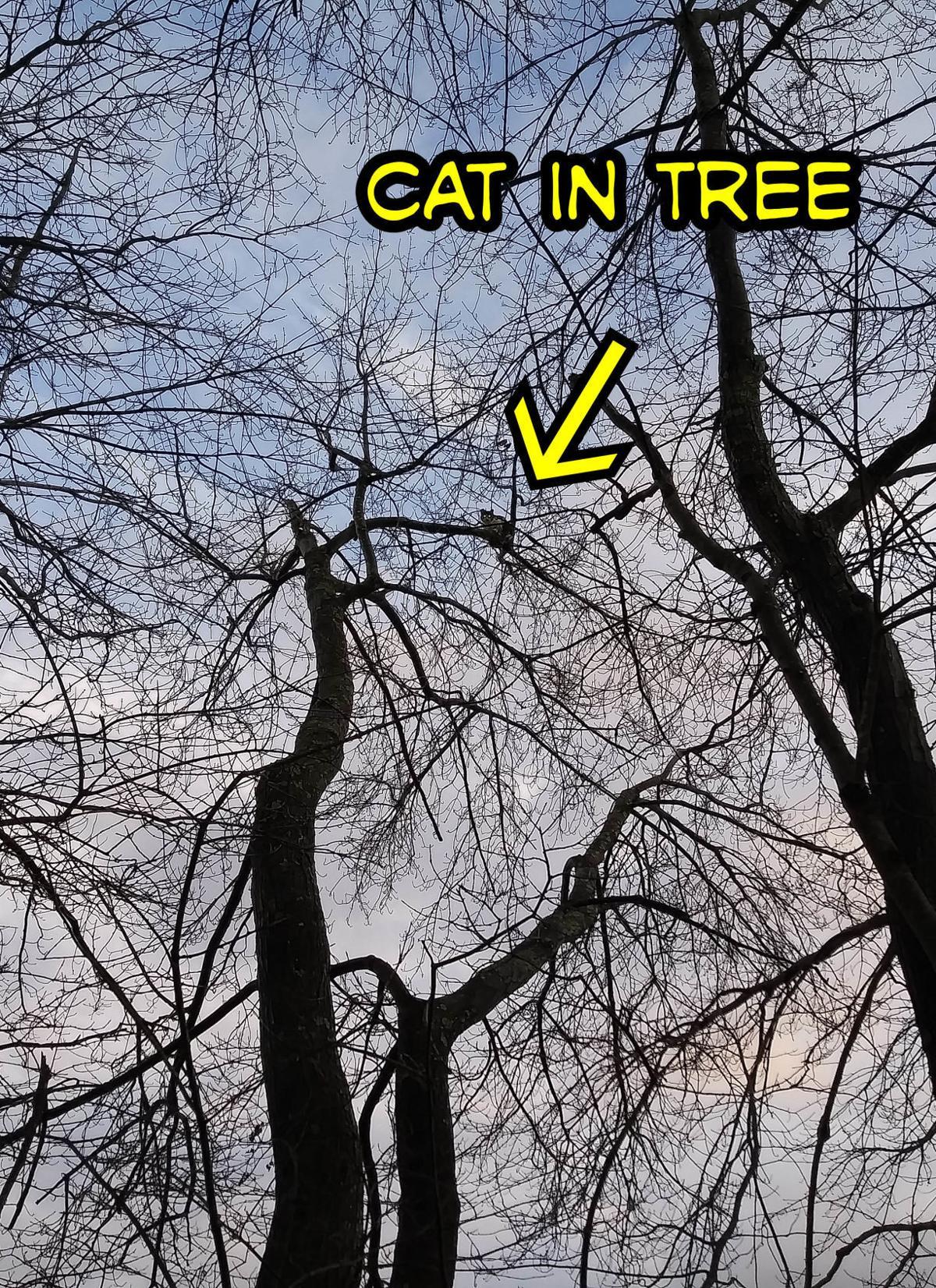 20191129-MAG-cat1