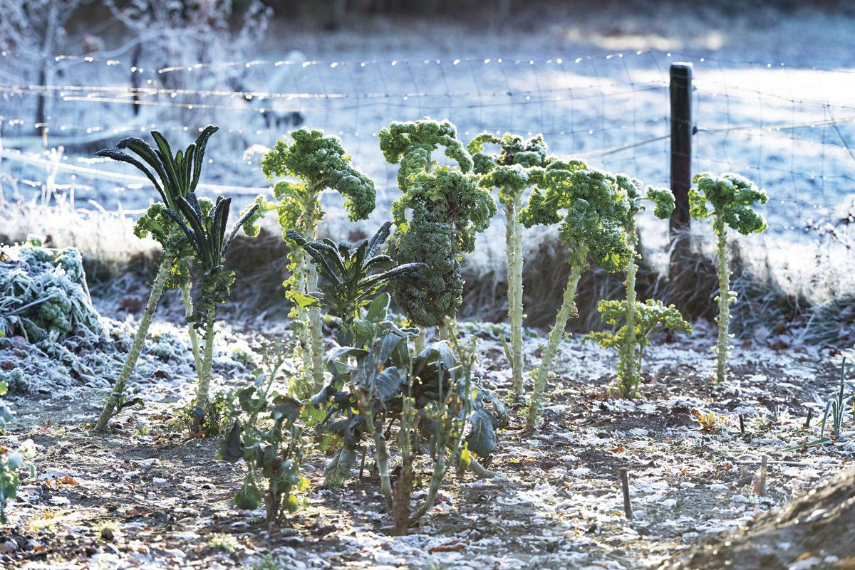putting a vegetable garden u0027to bed u0027 for the winter ask a farmer