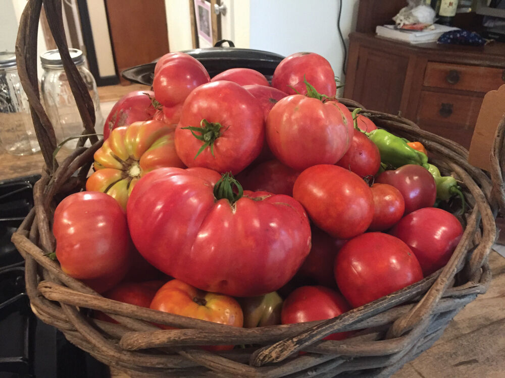 The Toilers & the Tomatoes