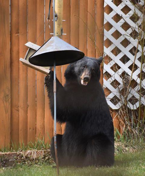 Swinging bird feeder