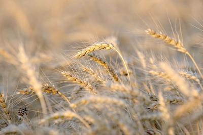 CLIMATE FARMING