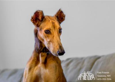 Dog of the Week: Farrah